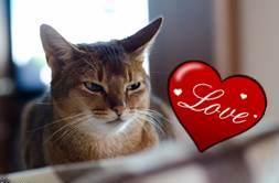 love daw